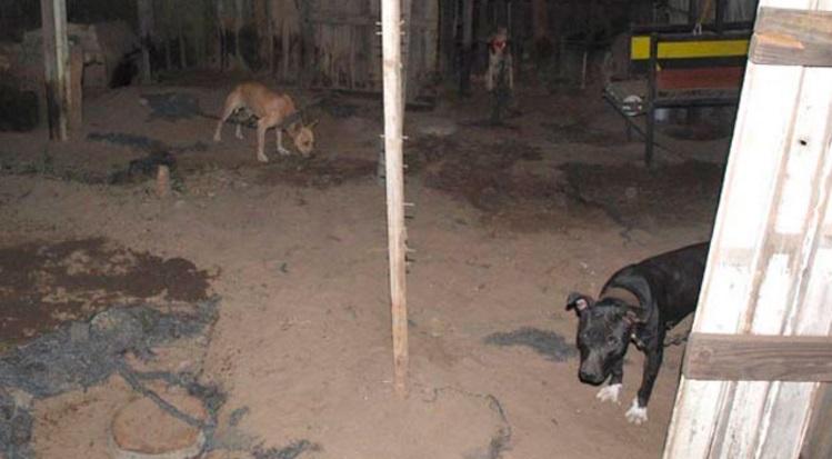 arrestado por pelea de perros 2