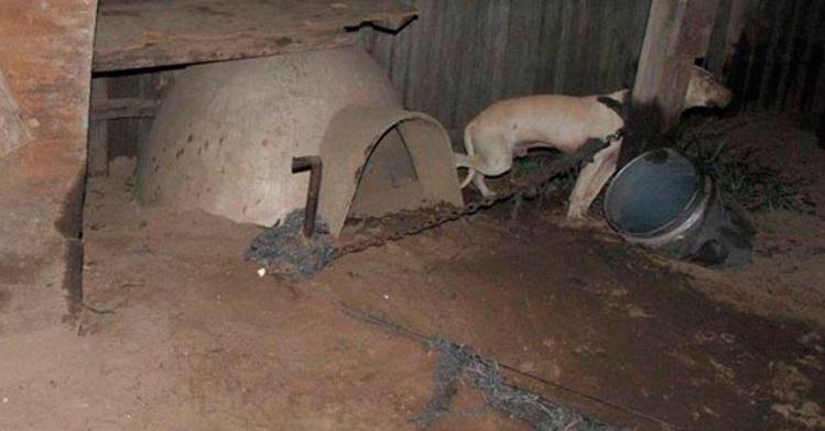 arrestado por pelea de perros 4