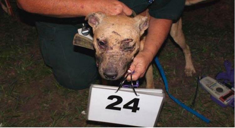 arrestado por pelea de perros 5