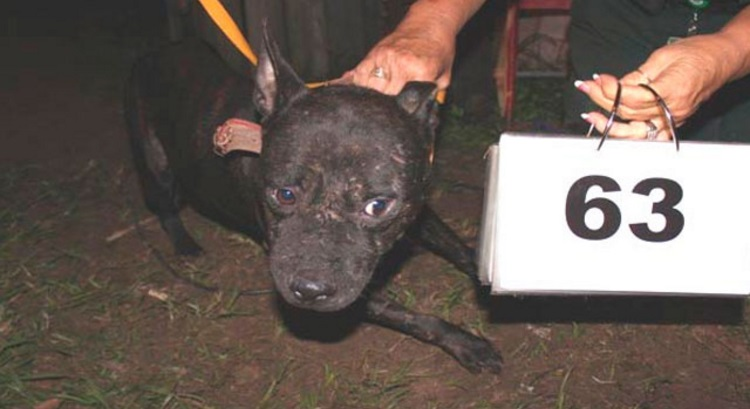 arrestado por pelea de perros 6