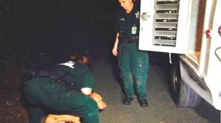 arrestado por pelea de perros 8