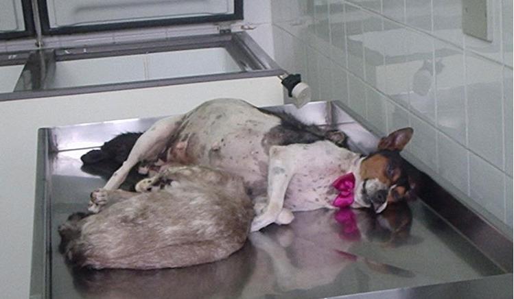 asesina de animales brasil 3