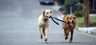 beneficios de tener dos perros 1