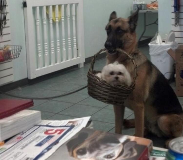 beneficios de tener dos perros 3