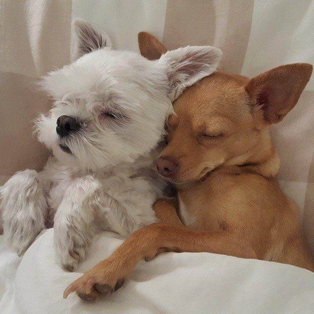 beneficios de tener dos perros 8
