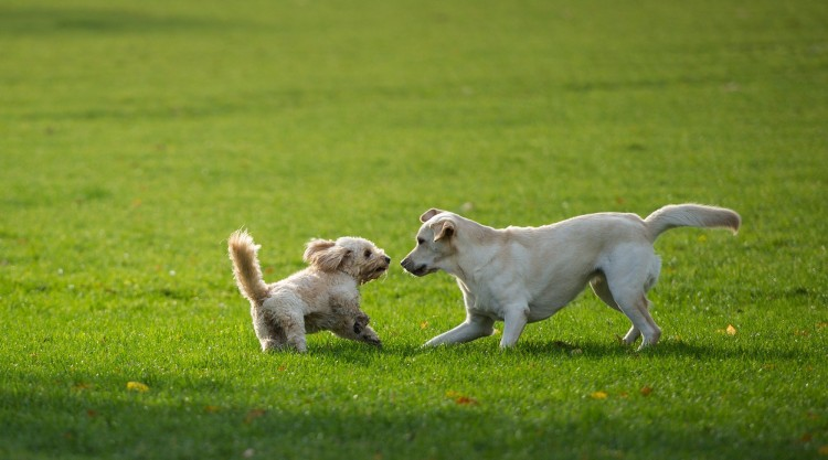 Two dogs play on November 4, 2013 im Alsterpark in Hamburg.   AFP PHOTO / DPA/ MAJA HITIJ /GERMANY OUT