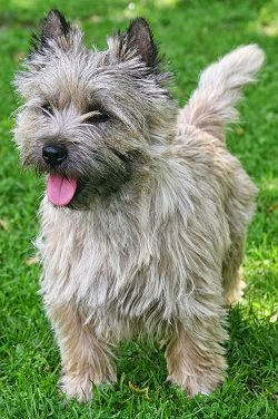 bobby-perro-que-estuvo-siempre-junto-a-la-tumba-de-su-amo3