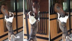 caballo-abrazo-perro