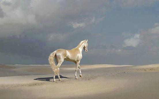 caballos dorados 2