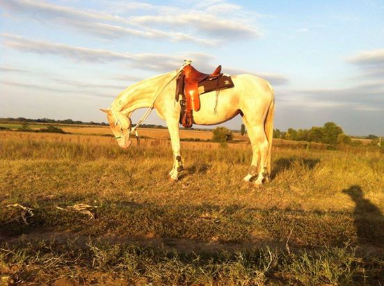 caballos dorados 3
