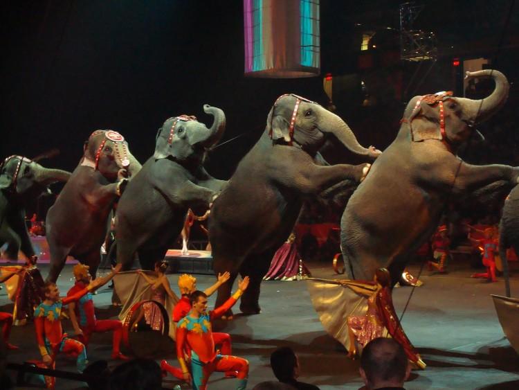 circo-mexico