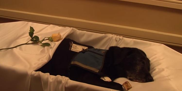 despedida perro funeraria 1