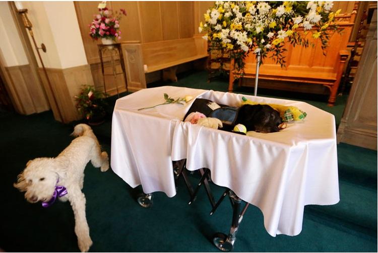 despedida perro funeraria 5