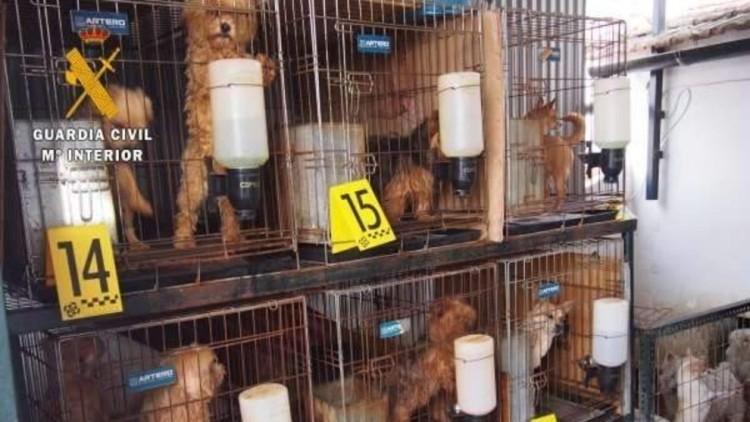 detenido-hombre-que-tenia-55-perros-hacinados