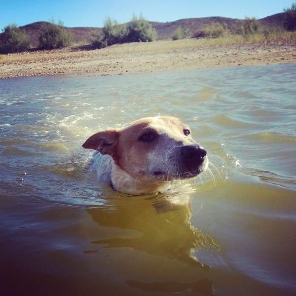 director entierra perro vivo 14