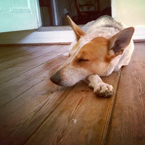 director entierra perro vivo 2