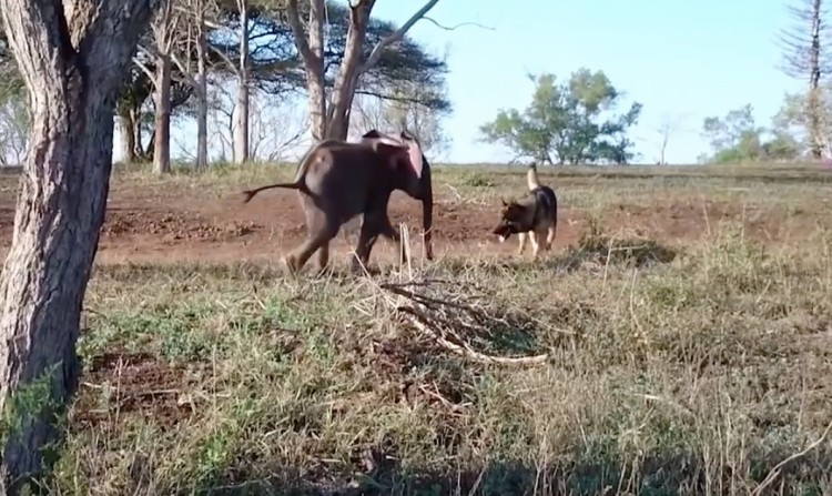 elefante-perro
