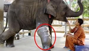 elefante protesis portada