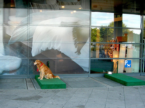 estacionamiento-para-mascotas1