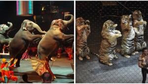 estudian-prohibir-animales-en-circos-en-madrid1 - copia