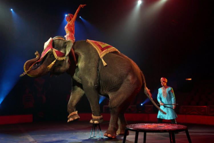 estudian-prohibir-animales-en-circos-en-madrid2