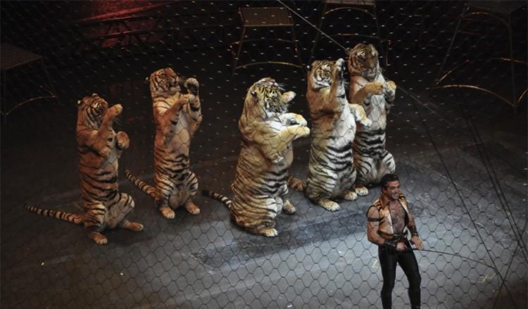 estudian-prohibir-animales-en-circos-en-madrid3