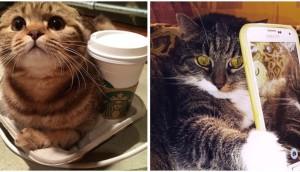 fotos-de-gatos-graciosas