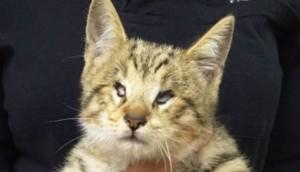 gatico ciego adoptado 2