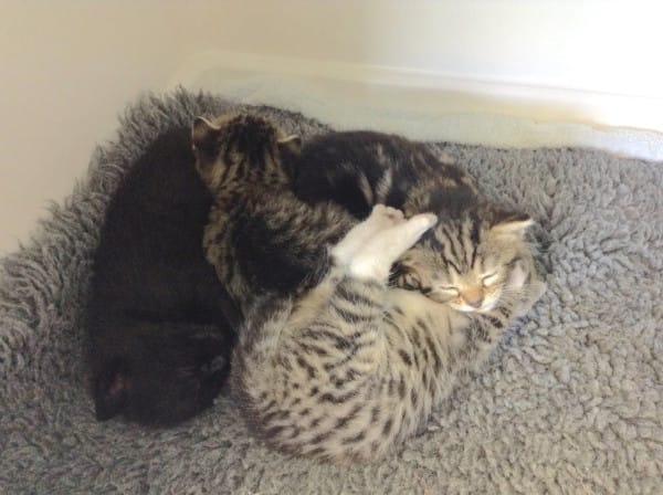 gatitos abandonados reciben sorpresa 2