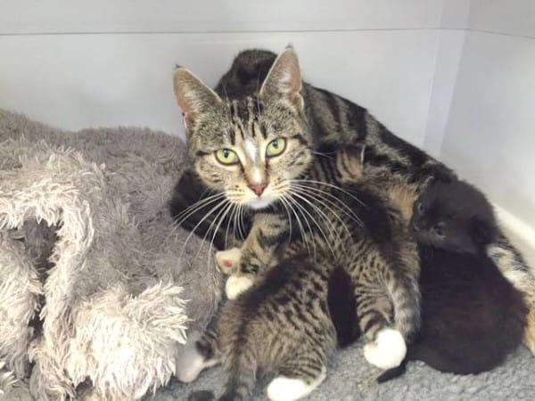 gatitos abandonados reciben sorpresa 4