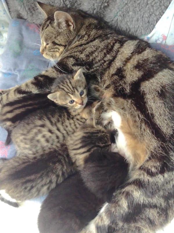 gatitos abandonados reciben sorpresa 5