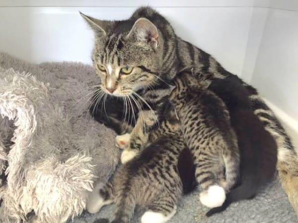 gatitos abandonados reciben sorpresa 7