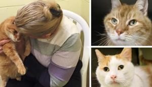 gato-adoptado2