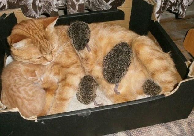 gato madre sustituta 1
