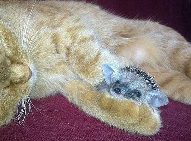 gato madre sustituta 2