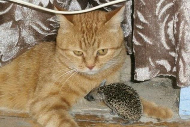 gato madre sustituta 3