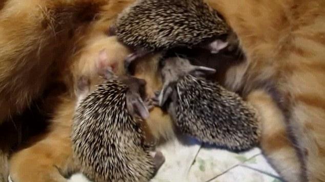 gato madre sustituta 5