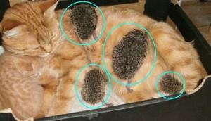 gato madre sustituta 8