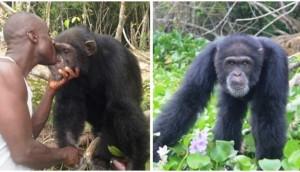 hombre-no-quiere-separarse-de-orangutan1 - copia