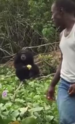 hombre-no-quiere-separarse-de-orangutan4