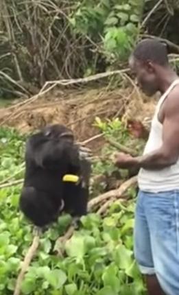 hombre-no-quiere-separarse-de-orangutan5