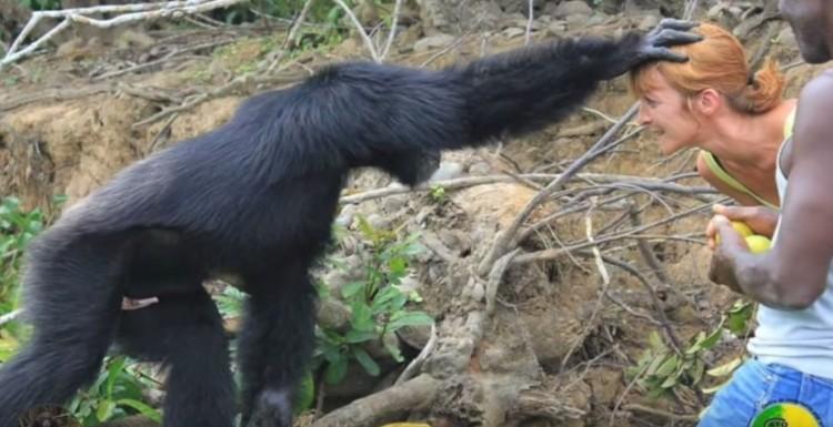 hombre-no-quiere-separarse-de-orangutan8