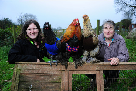 Nicola (left) and Anne Congdon with their jumper wearing chickens. Pic by Toby Weller. Ref: TRTW20151118A-002_C