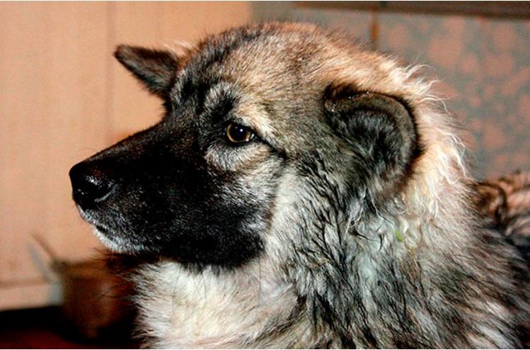 niña mowgli reunida con perro 12