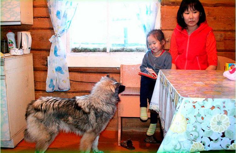 niña mowgli reunida con perro 13