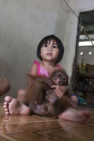orangutan-bebe-se-abraza-a-si-mismo4