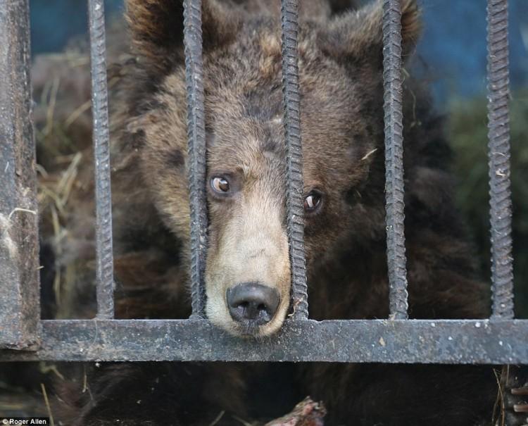 pareja-cuida-a-animales-de-zoo-abandonado10