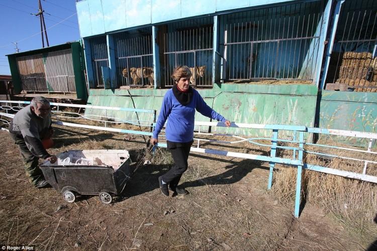 pareja-cuida-a-animales-de-zoo-abandonado3