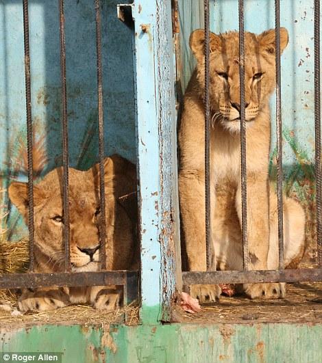 pareja-cuida-a-animales-de-zoo-abandonado5