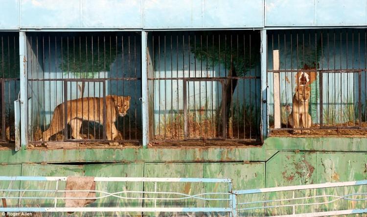 pareja-cuida-a-animales-de-zoo-abandonado7